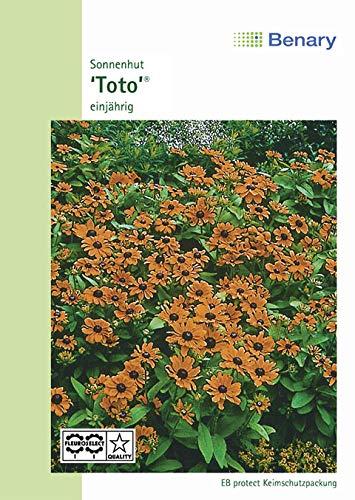 Benary Sonnenhut 'Toto Gold', für Beet- & Topfpflanzungen