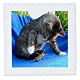 3dRose Katzen Design Getigerte Katze, Quilt, Platz, 8von