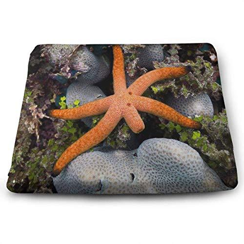 wusond Cojines de Asiento Cuadrados Gallery Starfish Legs Cojines de Espuma viscoelásticos de Confort Premium