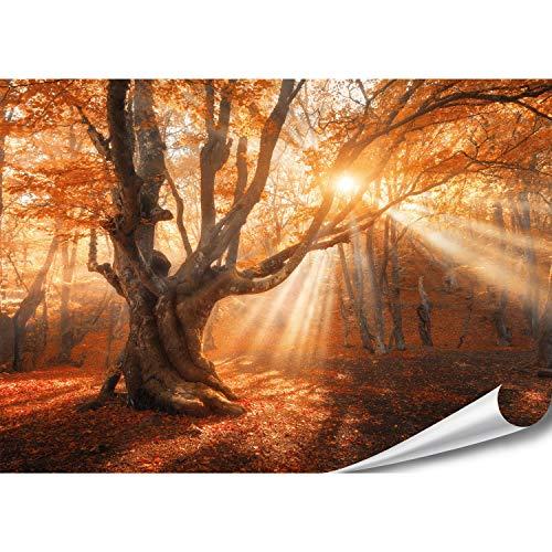 PMP-4life - Póster XXL de bosque mágico   140 x 100 cm   alta resolución XXL foto póster de árbol antiguo   póster natural extra grande   decoración de pared XL paisaje árboles flores bosque