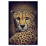 artboxONE Poster 30x20 cm Tiere Gepardinnen Portrait