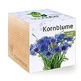 Ecocube Kornblume