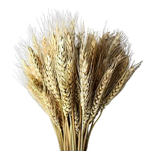 Taloit 100 ramos de trigo seco de trigo natural, simboliza la prosperidad, nueva vida, salón, jardín, boda, hotel, decoración