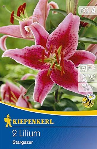 Kiepenkerl 533501 Lilie Stargazer (2 Stück) (Lilienzwiebeln)