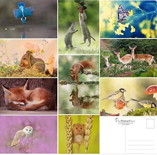 20 Wild Woodland Lot de cartes postales
