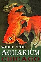 Golden RED Fish Visit The Aquarium in Chicago Illinois Travel Tourism 20