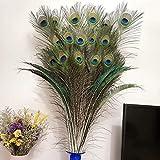 Hermosas plumas naturales...