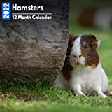 Calendar 2022 Hamsters: Cute Hamster Photos Mini Calendar a Monthly Square Book Planner With Inspirational Quotes each Month