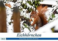Frankens Eichhoernchen (Wandkalender 2022 DIN A2 quer): Possierliche Eichhoernchen stehen Modell (Monatskalender, 14 Seiten )