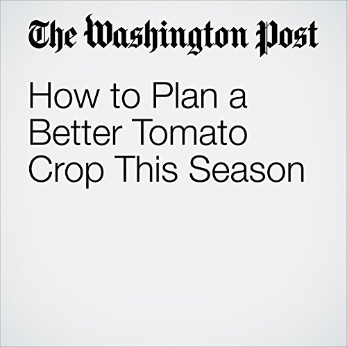 How to Plan a Better Tomato Crop This Season copertina