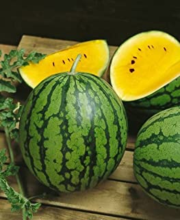 Yellow Doll Hybrid Watermelon Seeds - Citrullus Lanatus - 0.25 Grams - Approx 12 Gardening Seeds - Vegetable Garden Seed
