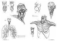 Anatomia artistica. Carnet di morfologia #3