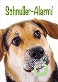 Witzige Doppelkarte, Grußkarte, Glückwunschkarte, Klappkarte mit Kuvert, Postkarte zur Geburt Hund mit Schnuller 'Schnuller-Alarm!' im 3er Set