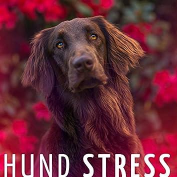 Hund stress: die perfekte Hintergrundmusik, um Hunde und Katzen zu entspannen