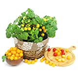 Keshang Planta perenne,Cherry Tomato Seed Home Garden with Four Seasons Vegetable Seeds-Seed 3_50pcs,Semillas de Flores