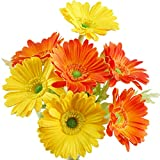 FiveSeasonStuff 7 Stems of Artificial Real Touch Gerbera Flowers & Bouquet,31cm (12.2 inches) (Real Touch Mixed Orange and Yellow)