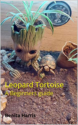 Leopard Tortoise: A Beginners guide (English Edition)