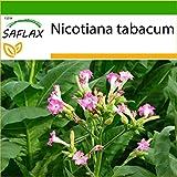SAFLAX - Tabaco de Virginia - 250 semillas - Con sustrato estéril para cultivo - Nicotiana tabacum
