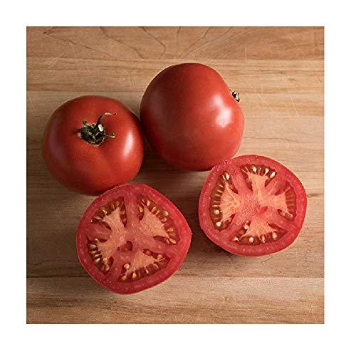 David's Garden Seeds Tomato Slicing Nepal SL7733 (Red) 50 Non-GMO, Heirloom Seeds