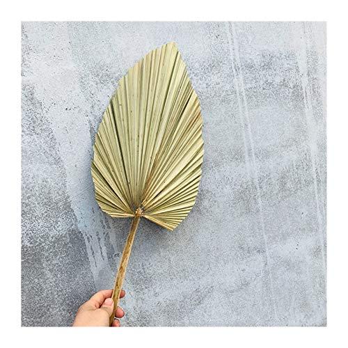 CCAN Getrocknete Blume Palm Fan Blatt Pflanze Sonnenblumeblatt Home Decoration Fenster Hochzeit Bogen Dekoration Blume Anordnung Hängen Blume Wand (Farbe : 01)