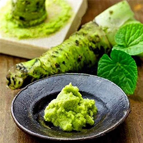 TENGGO Egrow 300 Teile/Paket Wasabi Samen Senf Meerrettich Wasabi Gemüse Hausgarten Pflanzen Für Stauden Hardy
