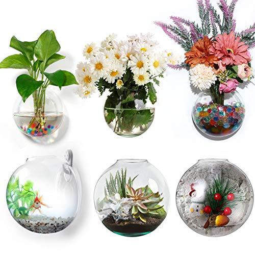 6 Stücke Wandbehang Pflanzgefäße Glas Container Rund Glas Pflanzgefäße Hängend Terrarien Luft Pflanzgefäße Innen Pflanzenhalter Glas Vase Sukkulent Wand Hängend Pflanzgefäße zum Innere Wand