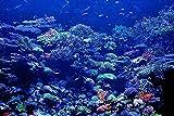 Lacvik Puzzles 3000 Piezas para Adultos Puzzles de Madera submarinos de Color Coral DIY decoración de Arte Moderno para el hogar 122x81cm