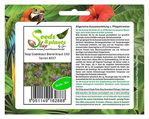 Stk - 30x Ysop, Eisenkraut, Bienenkraut EKO - Ökologische Samen Pflanze KS17 - Seeds Plants Shop Samenbank Pfullingen Patrik Ipsa