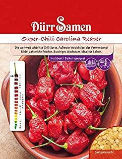 Super-Chili Carolina Reaper, die weltweit schärfste Chili-Sorte bildet zahlreiche Früchte, Vorsicht bei deren Verwendung
