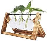 Vandove Fioriera da Tavolo in Vetro, con 3 Vasi in vetro a Forma di Lampadina, Piante Idroponiche Supporto in Legno Solido, per la casa il Giardino Come Decorazione per Matrimoni (3 Vasi)