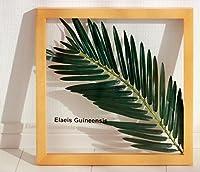 リーフパネル Forest Deco Elaeis Guineensis(ギニアアブラヤシ) ナチュラルフレーム 絵画 インテリア 壁掛け アート ポスター フック 海 ピカソ 額縁