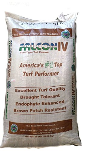 SeedRanch Falcon IV Turf Type Tall Fescue Grass Seeds - 5 lbs.