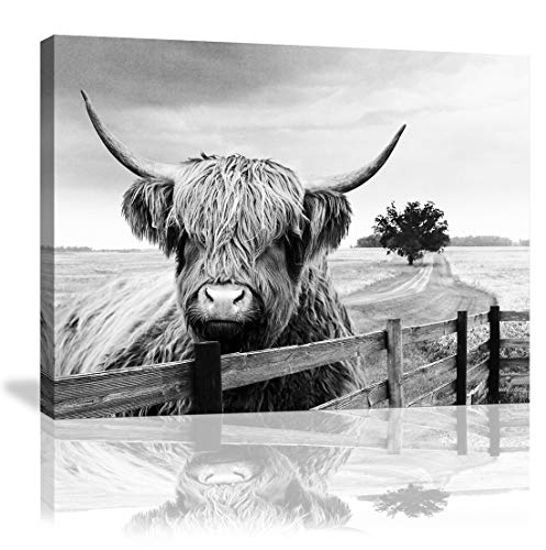 Highland Cow Canvas Black and White Landscape Pasture Hairy Cow Animal Wall Art Pictures