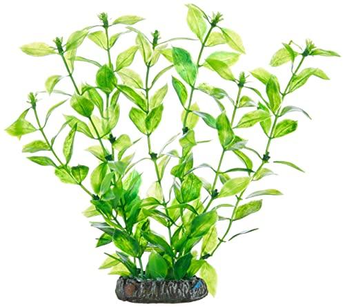 Hobby Planta Hygrophilia