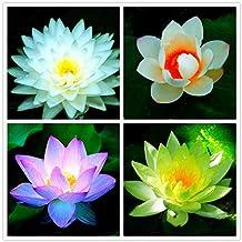 Earth Hopper Nelumbo Nucifera Rare Mixed Colour Seed 15 Seeds Bowl Lotus Flower Aquatic Plants
