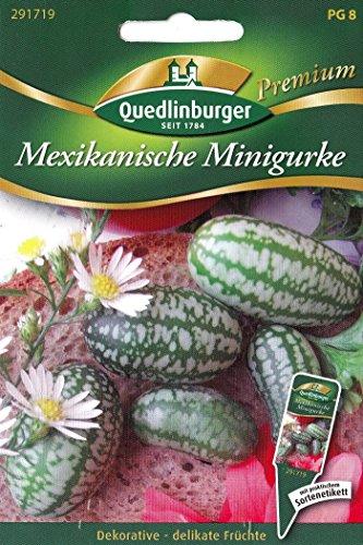 Mexikanische Minigurke, Melothria scabra, ca. 12 Samen