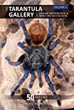 The Tarantula Gallery: Image Reference & Species Accounts