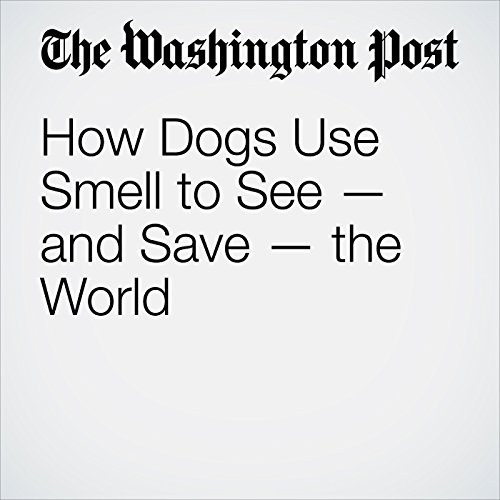 How Dogs Use Smell to See—and Save—the World audiobook cover art