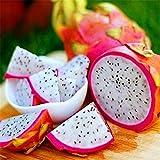 Semillas de Pitaya, 20 unidades de semillas de Pitaya Hylocereus Undatus Dragón Fruta Jardín Patio Granja Planta, blanco