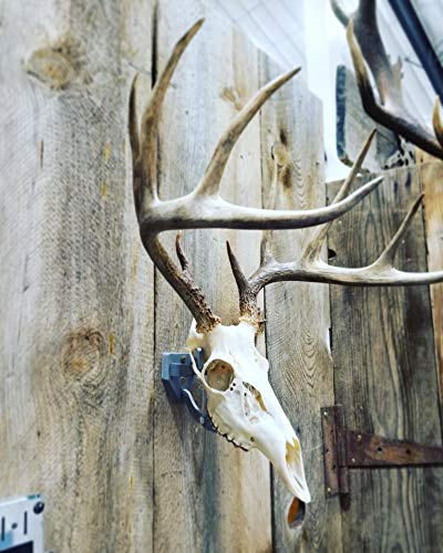 Top Rack Trophy Buck European Mount Hanger