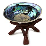Ocean Shell Studios 5 - 6 inches Premium Natural Abalone (Pāua) Shell with Wooden Stand for Smudging, Cleansing Home, Meditation, Shell Crafts,Incense Holder, Home Décor, 100% Natural, Sustainable.
