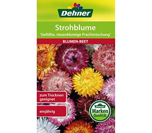 Dehner Blumen-Saatgut, Strohblume