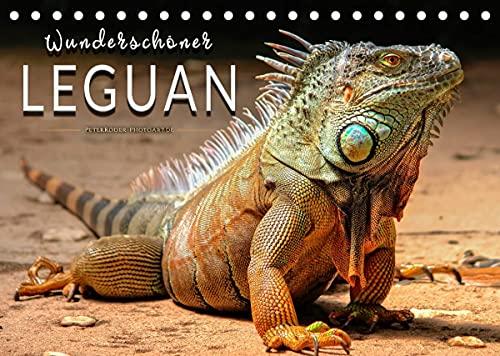 Wunderschöner Leguan (Tischkalender 2022 DIN A5 quer)