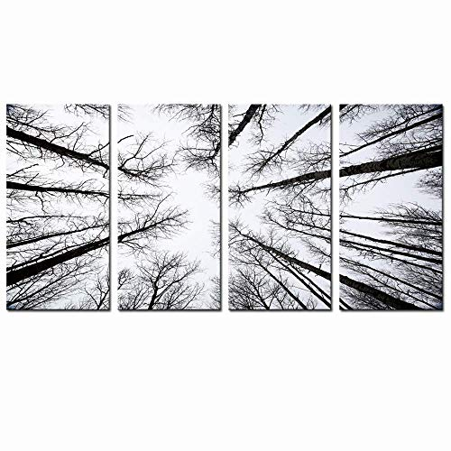 LevvArts - Black and White Forest Canvas Wall Art Low Angle View Aspen Trees