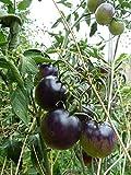 Portal Cool OSU Azul Tomates 15 Semillas de Tomate Azul producido en Francia