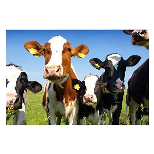 banjado Glas Spritzschutz für Küche und Herd | Küchenrückwand mit Motiv Kühe | Glasrückwand selbstklebend ohne Bohren | Küchenspiegel magnetisch und beschreibbar (75x50cm)
