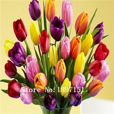 Big graines de tulipe vente de Bonsai, blanc, bleu, graines de fleurs pourpres, 200 variétés un grand sac de graines de 200pc, plantes à fleurs