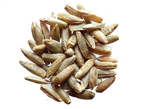 Seigle - 40 grammes - Secale Cereale L. - Rye - (Engrais Vert - Green Manure) - SEM05
