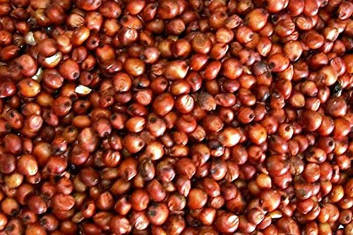 1 LB of Organic Milo - Red Sorghum Grain USDA Certified Organic, Non-GMO, Perfect for Mushroom Growers or Bread Makers