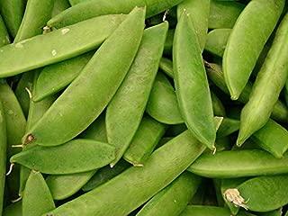 50 Mammoth Melting Sugar Pea Stringless Snow Pea Pisum Sativum Vegetable Seeds #SFB